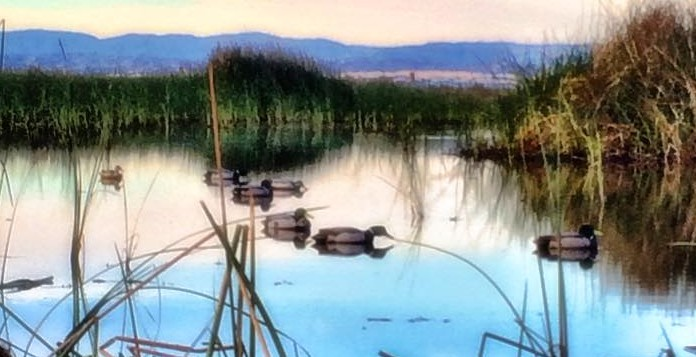 Decoys on Pond